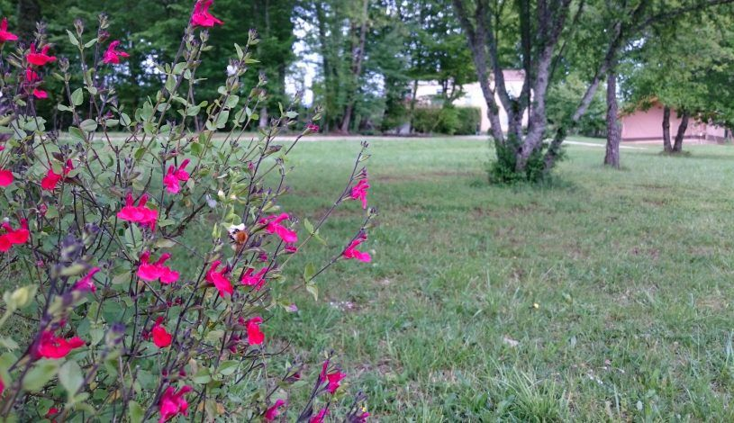 Campsite trees and flowers in the Dordogne